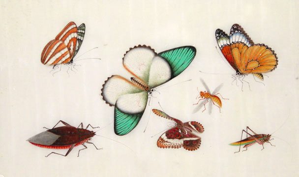 Butterflies & Insects. Tinqua, active.