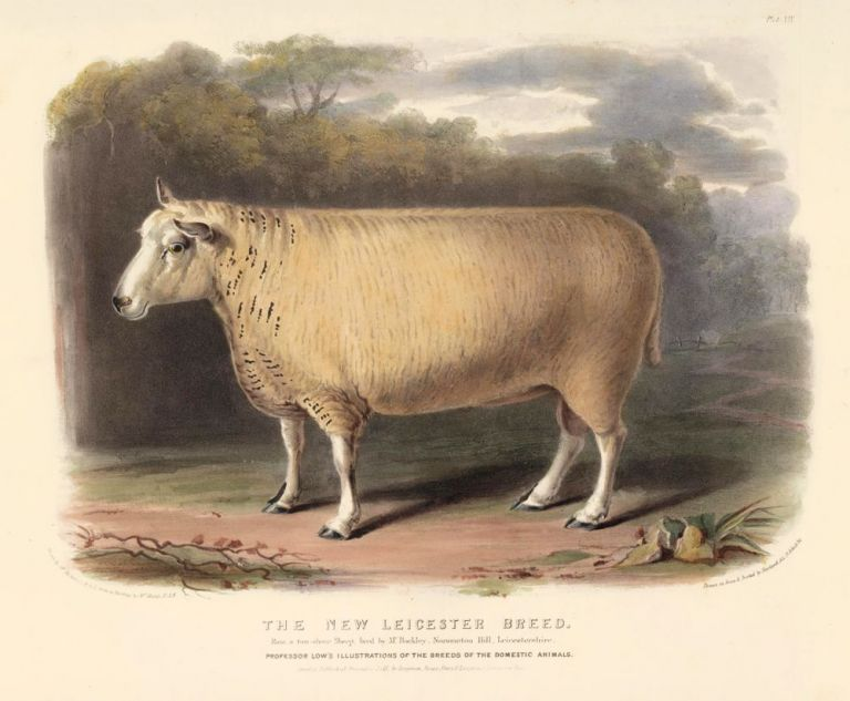 The New Leicester Breed. The Breeds of the Domestic Animals of the British Islands. David Low.