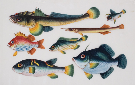 A School of Tropical Fish. Cantonese School.