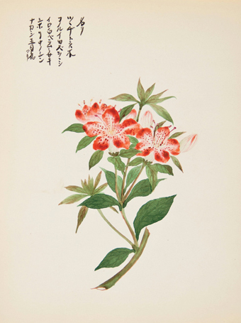 Red Lily. Japanese School.
