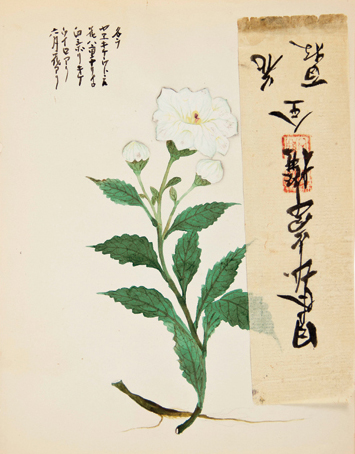 White flower with additional rice paper strip. Japanese School.