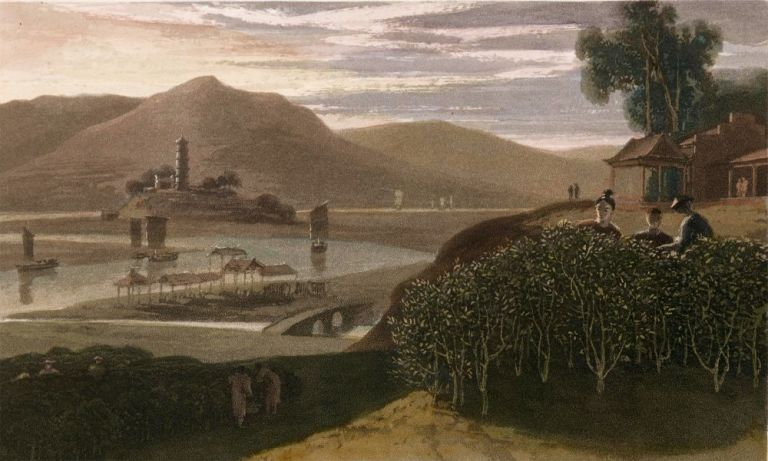 Tea Tree. Interesting Selections from Animated Nature. William Daniell.