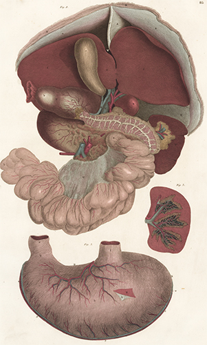 Liver pancreas spleen and stomach anatomical plates of the human liver pancreas spleen and stomach anatomical plates of the human body john liver pancreas spleen and stomach anatomical ccuart Images