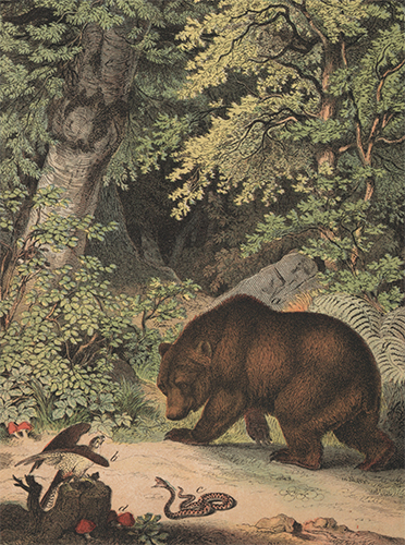 Brown Bear. The Instructive Picture Book. Adam White, M H. H. J.
