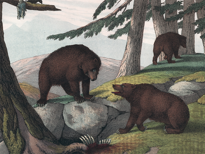 Grizzly Bears. The Instructive Picture Book. Adam White, M H. H. J.
