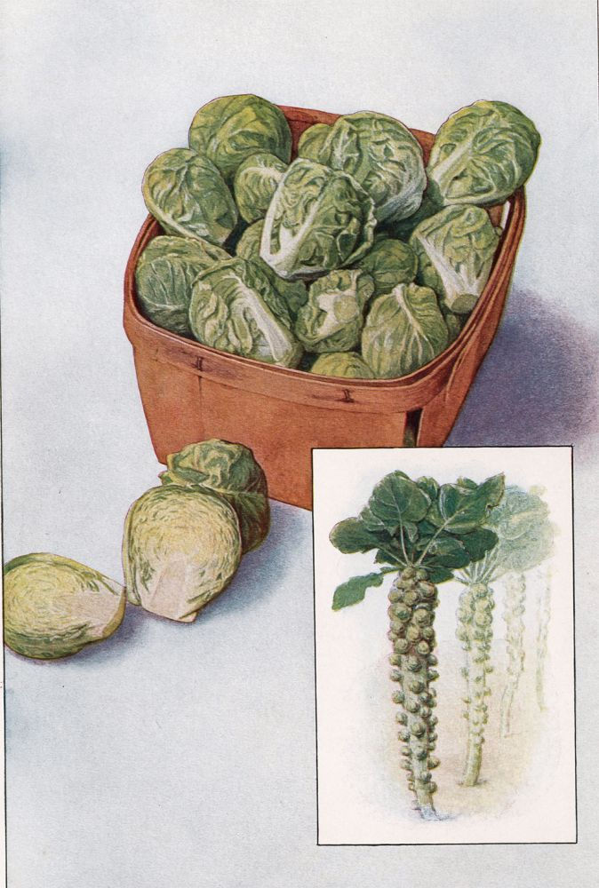 Brussels Sprouts. The Grocer's Encyclopedia. Artemas Ward.