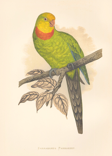 Barraband's Parrakeet. Parrots in Captivity. William Thomas Greene.