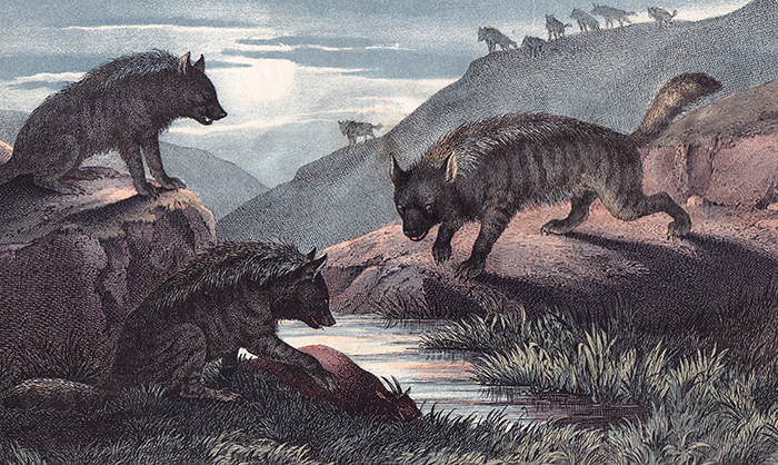 Hyena. The Instructive Picture Book. Adam White, M H. H. J.