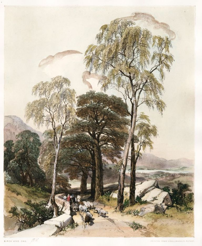 Birch and Oak. The Park and the Forest. James Duffield Harding.