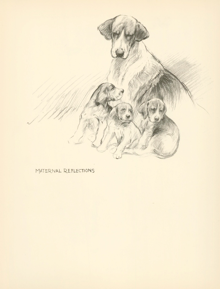 Beagle and Puppies. Reverse: Hounds please. Just Dogs: Sketches in Pen & Pencil. Kathleen Frances Barker.