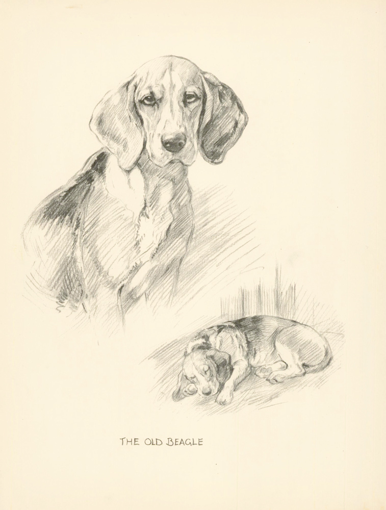 Beagle. Reverse: Bulldog. Just Dogs: Sketches in Pen & Pencil. Kathleen Frances Barker.