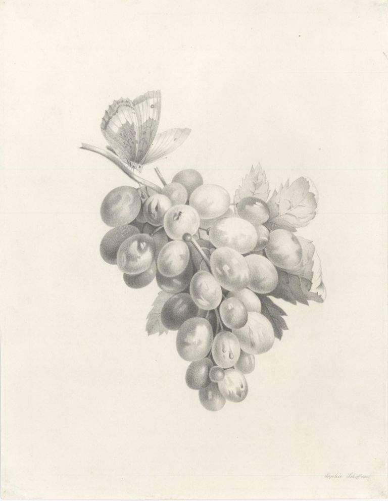 Bunch of grapes with butterfly. Sophie Schiffner, Austrian School.