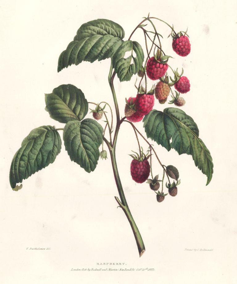 Raspberry. A Selection of Flowers. Valentine Bartholomew.