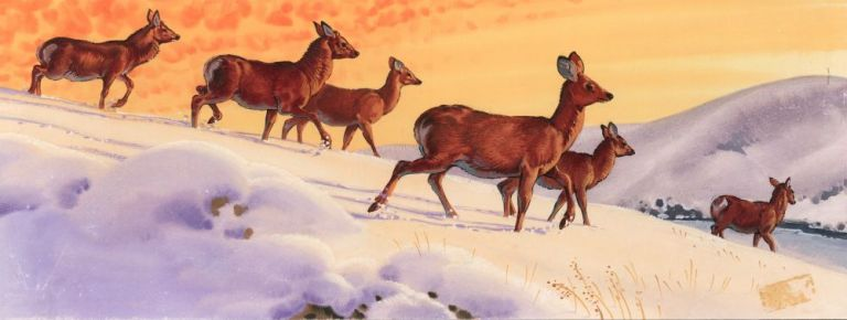 Deer on Snowy Mountain. Unknown.