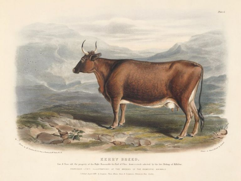 The Kerry Breed. The Breeds of the Domestic Animals of the British Islands. David Low, W. Nicholson.