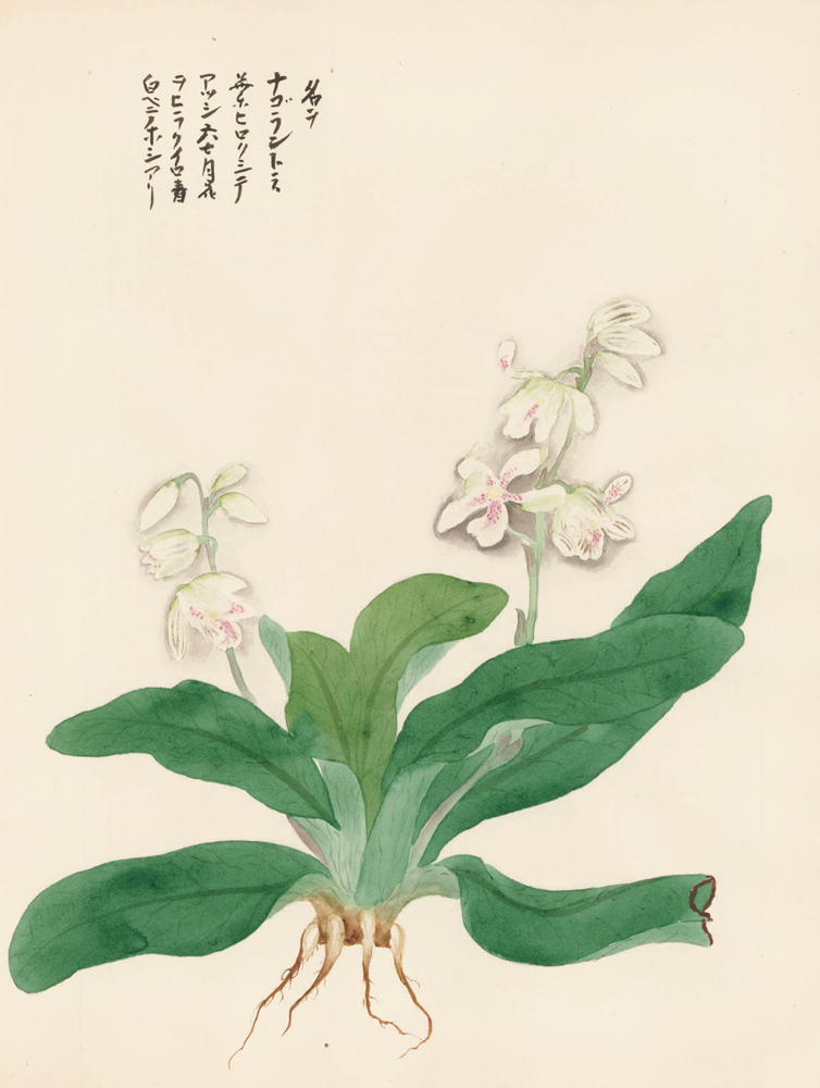 White Lilies. Japanese School.