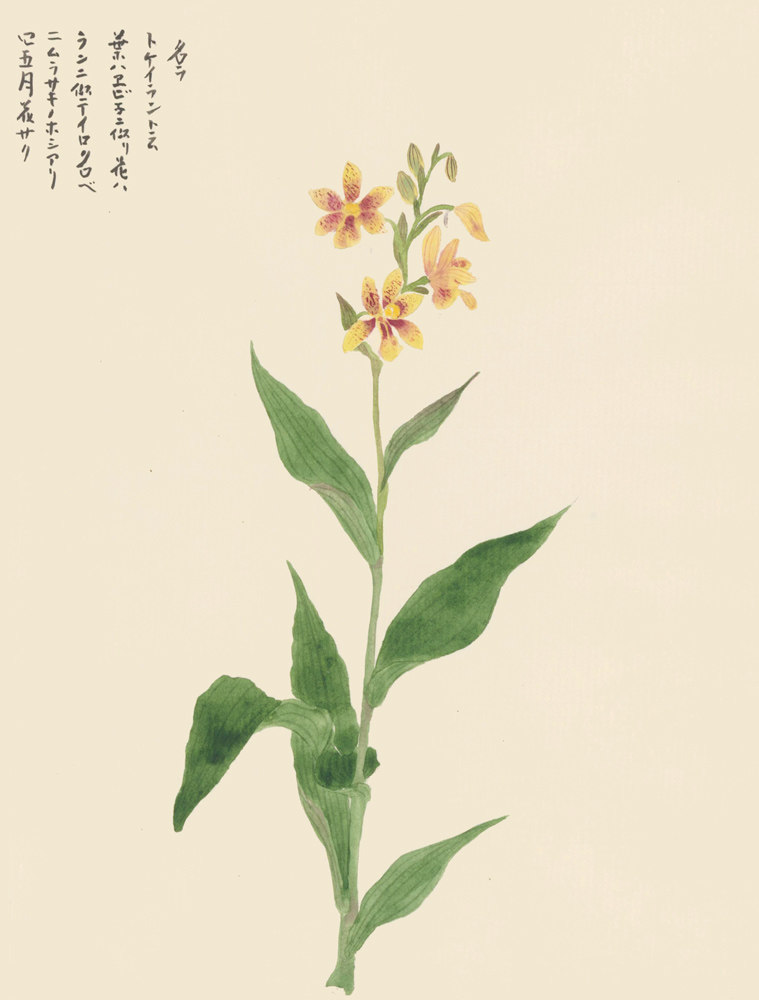 Spotted Yellow Lilies. Japanese School.