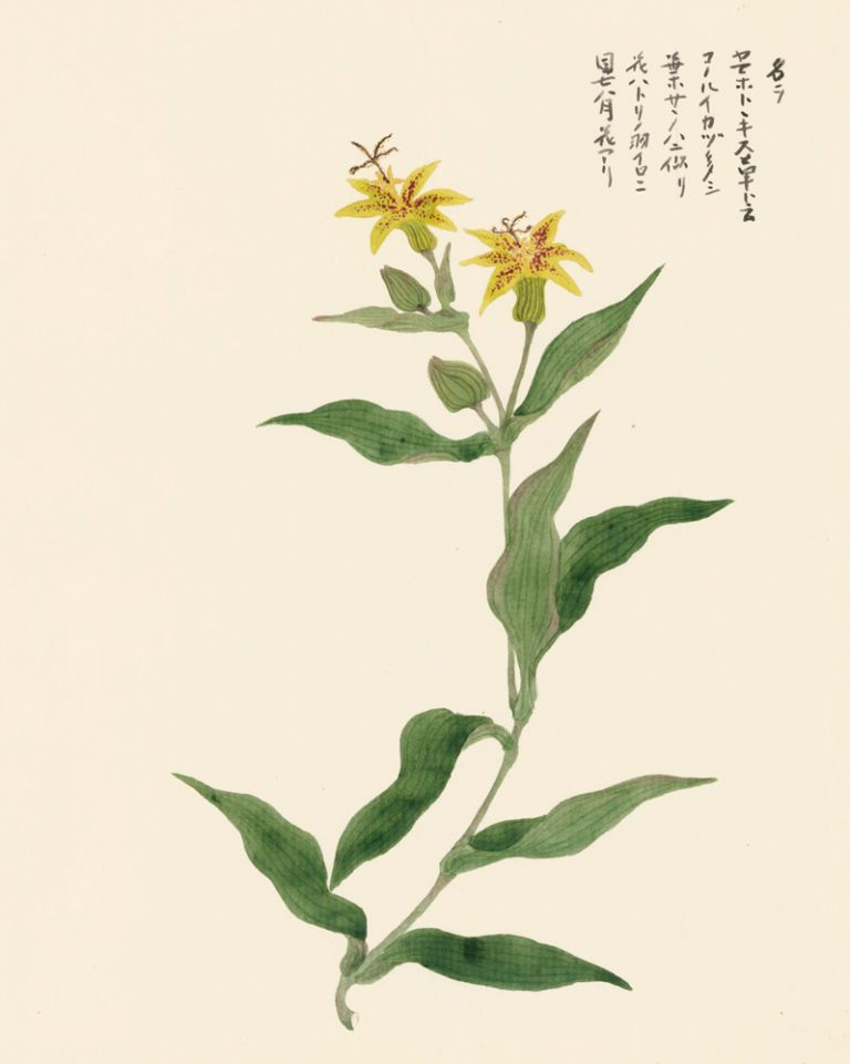 Tiger Lilies. Japanese School.