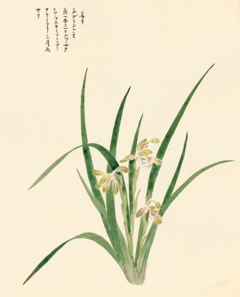 Irises. Japanese School.