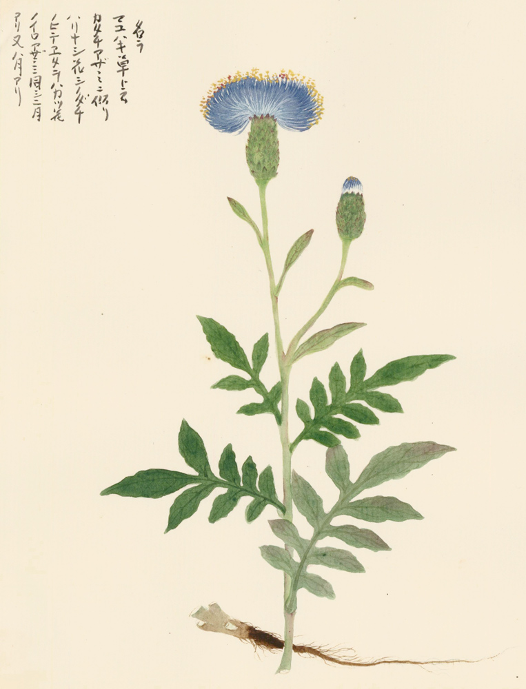 Blue and yellow flower. Japanese School.