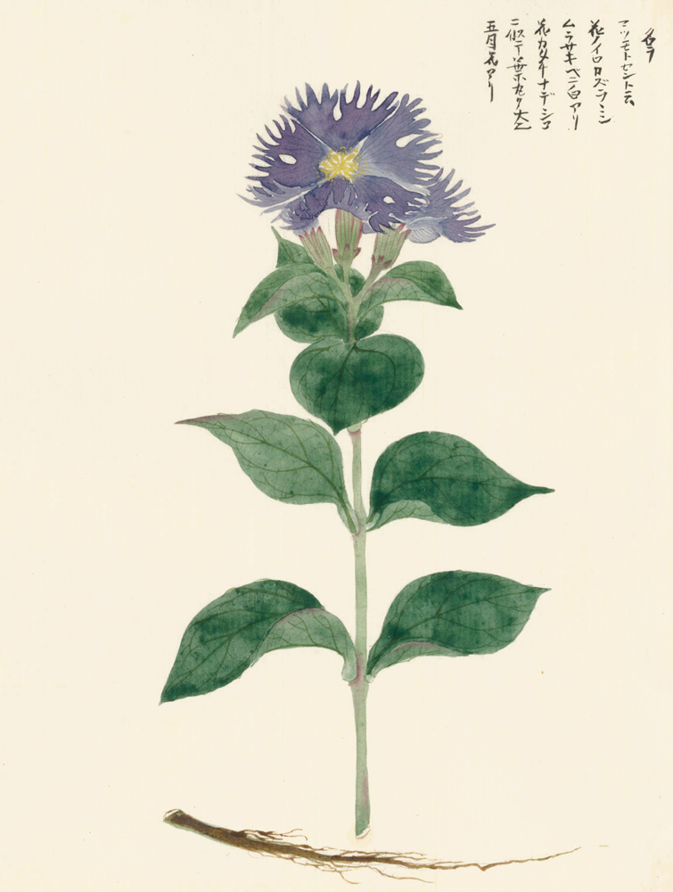 Violet Flower with Yellow Center. Japanese School.