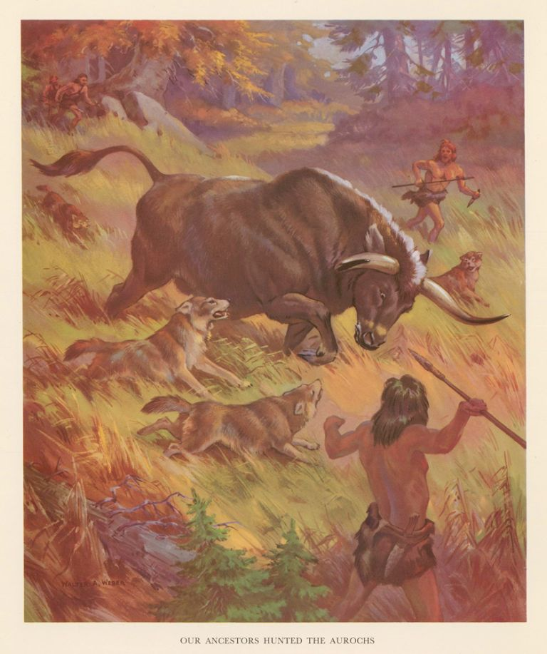 Our Ancestors Hunted the Aurochs. Homes and Habitats of Wild Animals. Walter Alois Weber.