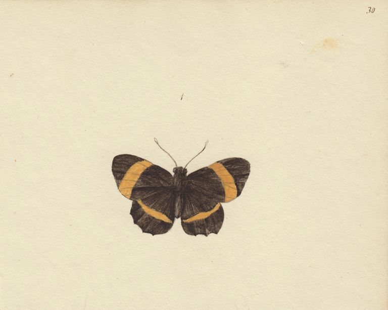 Black and yellow butterfly. Butterflies and Insects. Sara Anne Moore.