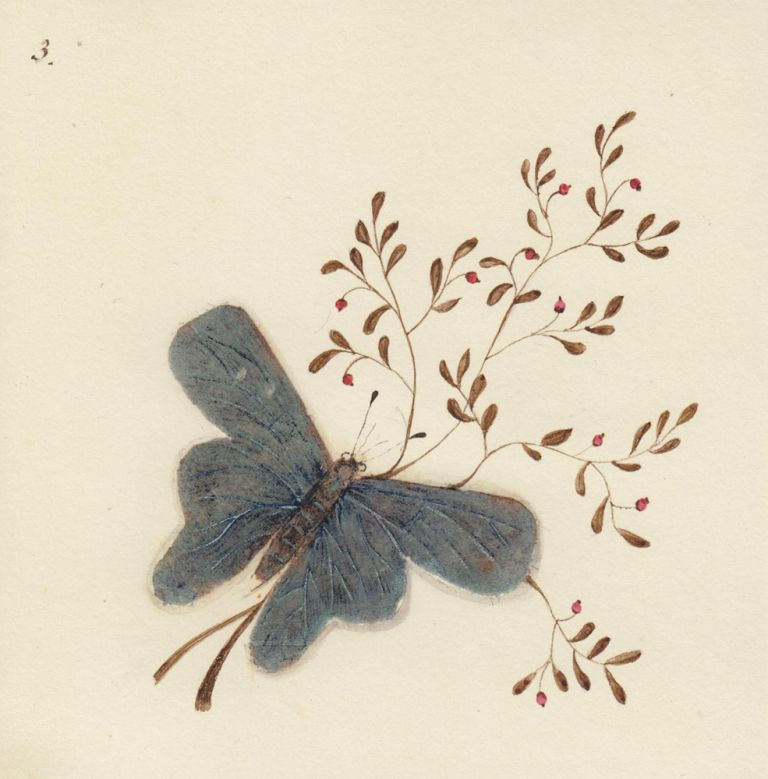 Butterfly. Butterflies and Insects. Sara Anne Moore.