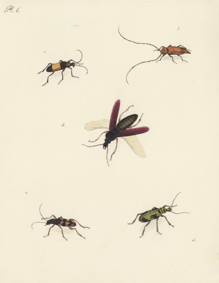 Five insects. Butterflies and Insects. Sara Anne Moore.
