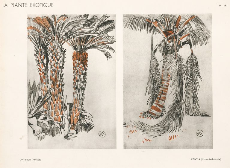 Date Palm & Kentia Palm. La Plante Exotique. Mathurin Meheut.