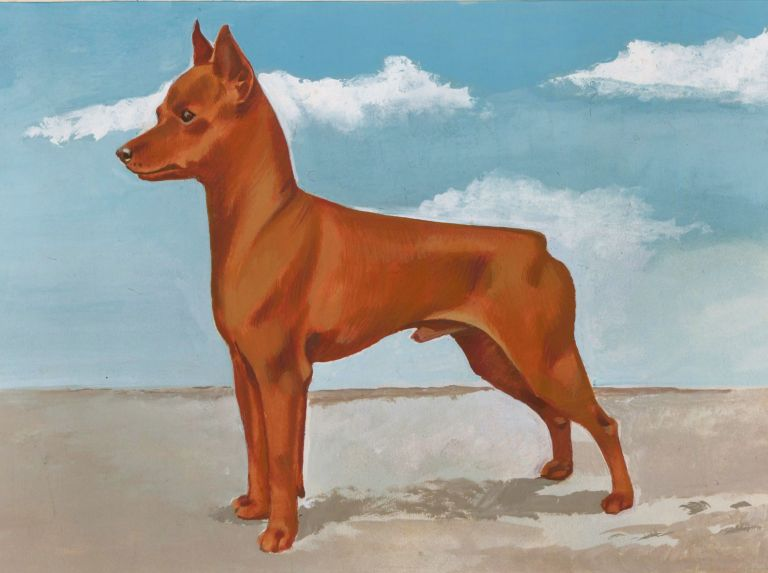 Miniature Pinscher. Unknown.