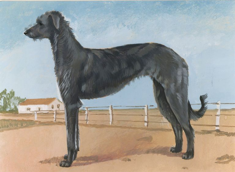 Deerhound. Unknown.