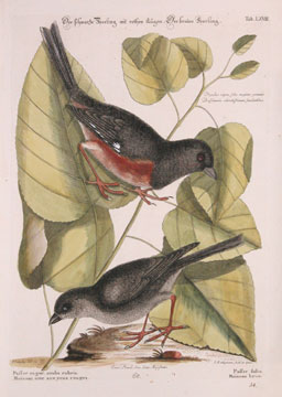 Natural History of Carolina, Florida and Bahama Islands. Johann Michael Seligman
