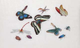 Butterflies & Insects. Youqua, Cantonese School
