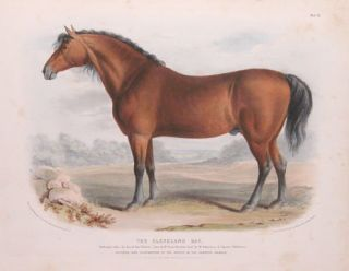 The Breeds of the Domestic Animals of the British Islands. David Low, W. Nicholson.