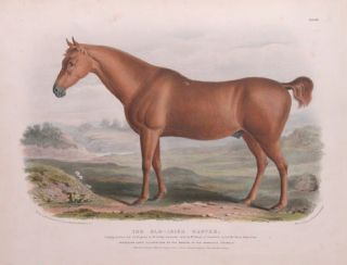 Breeds of Domestic Animals