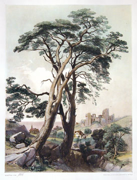 Scotch Fir. The Park and the Forest. James Duffield Harding