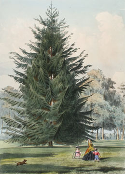 The Pinetum Britannicum. Edward James Ravenscroft