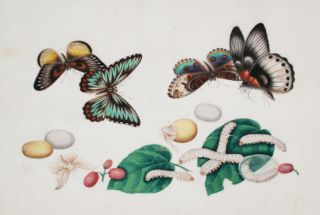 Butterflies and Silk Worms with Lychee Nuts