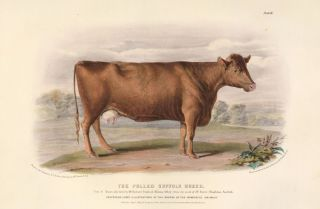 The Breeds of the Domestic Animals of the British Islands. David Low, W. Nicholson