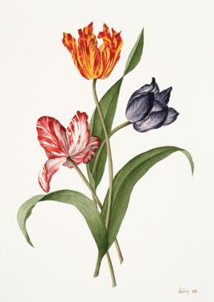 Parrot Tulips [Pink, Yellow, Blue].