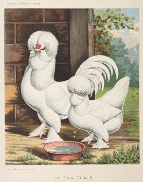 Illustrated Book of Poultry. J. W. Ludlow, after, Lewis Wright.
