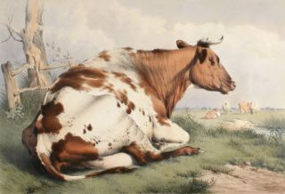 Groups of Cattle Drawn from Nature. Thomas Sidney Cooper