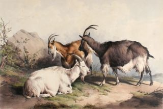 Groups of Cattle Drawn from Nature. Thomas Sidney Cooper.