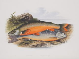British Fresh-Water Fishes. The Rev. W. HOUGHTON