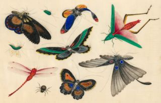 Butterflies and Insects. Tinqua