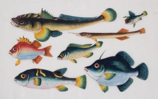 A School of Tropical Fish. Cantonese School