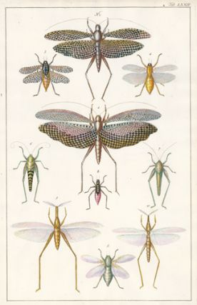 Orthoptera family: grasshoppers, crickets, locusts. Locupletissimi rerum naturalium thesauri...