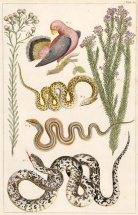 Red bird, multi-colored snakes, and lilac-colored, shrub-like flowers. Locupletissimi rerum...