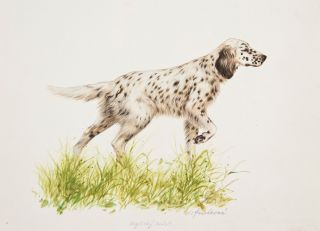 English Setter. Jaromir Knotek.